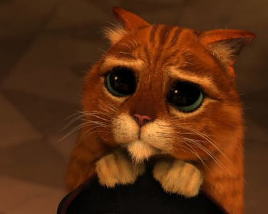 Hoovering narcisista - gato